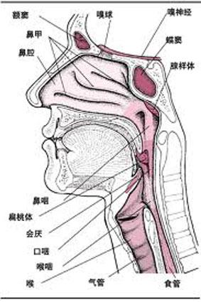 声带息肉拖延不治 癌变率高