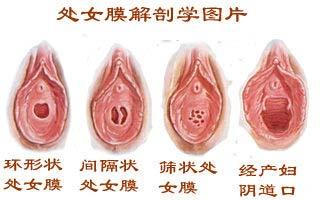 青春期女孩性器官发育解密图片