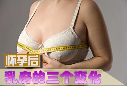 怀孕后乳房