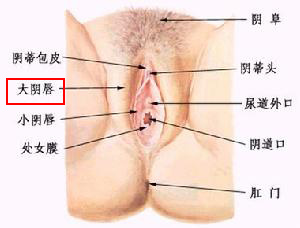 史上最震撼的女性阴道图片(图解)