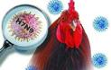 禽流感不可怕