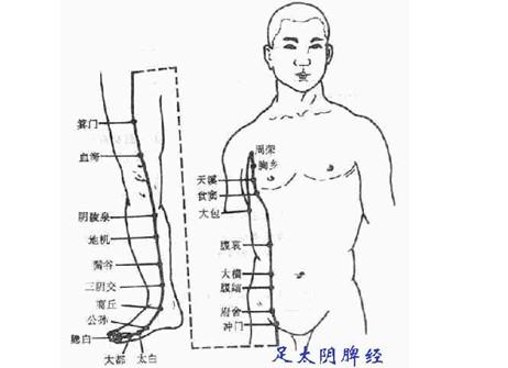 人体全身各部位穴位图示