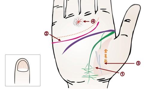 中医教你从手相识健康(下)中医教你从手相识健康