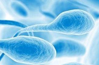 认识精子:了解精子10个常识